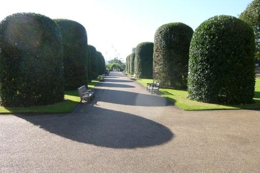 Tea at the Orangerie (3)