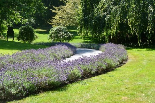 Vancouver Garden (2)