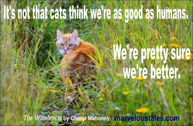 Cats v. Humans